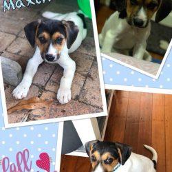 Maximus – Adopted